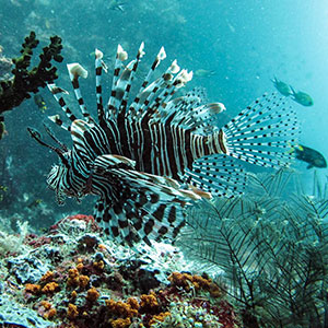 Where to go on a snorkel safari