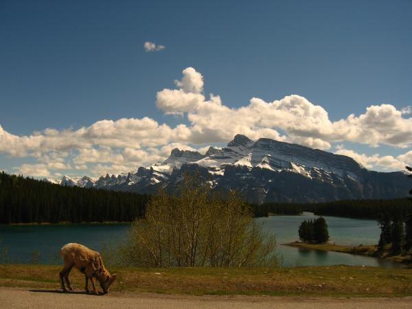 Canadian Rockies and National Parks of America