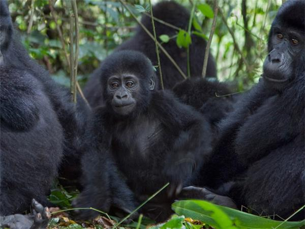 Rwanda, Kenya & Uganda wildlife vacation, on a shoestring