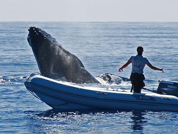 Budget Tonga vacation, swim with humpback whales