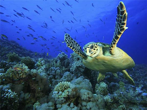 Maldives vacation, wildlife cruise