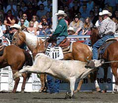 Team roping, animal welfare issues at rodeos and stampedes