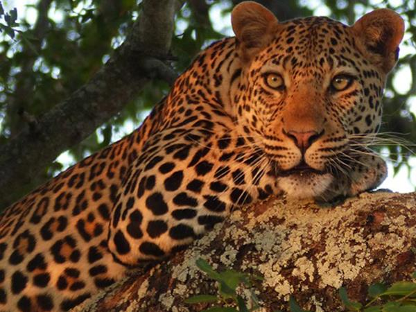 7 day luxury Kruger safari vacation