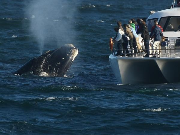 Wildlife safari and whale watching in South Africa
