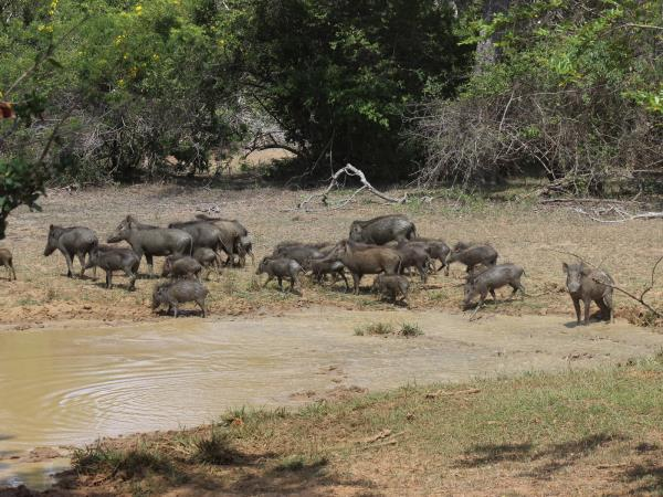 Wildlife vacation in Sri Lanka, private departure