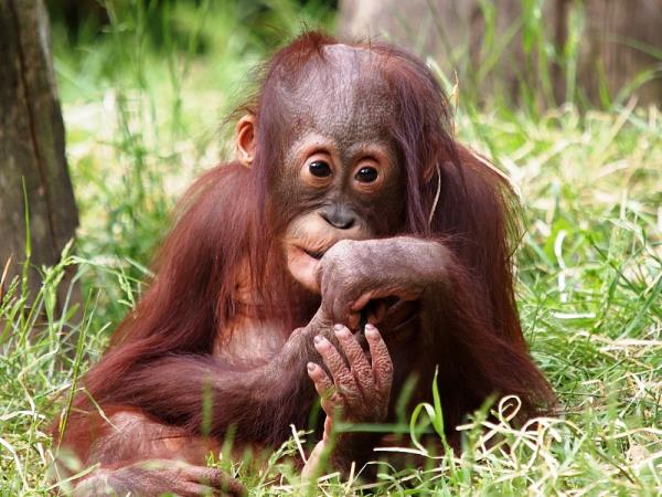 Borneo wildlife vacation, 13 days