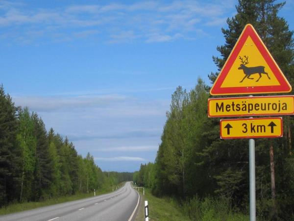 Wildlife conservation holiday in Finland