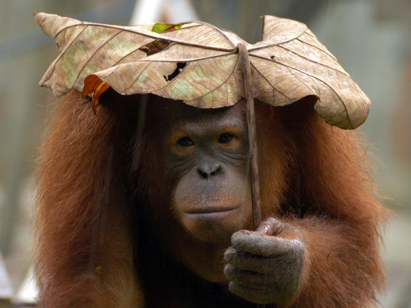Borneo Wildlife Volunteer Project