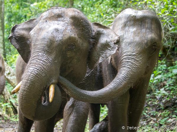 Elephant conservation project with hill tribes in Thailand