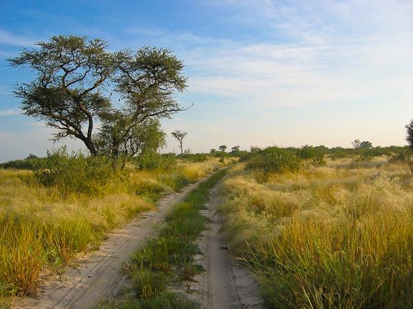 Kalahari desert expedition safari, Botswana
