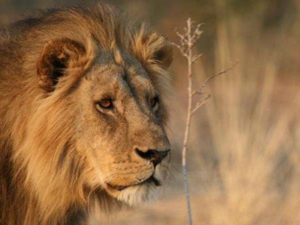 3 day Kruger safari in South Africa