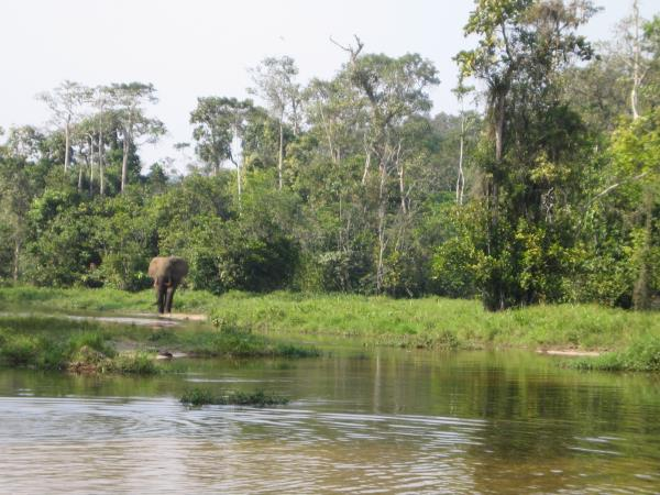 Central African Republic rainforest adventure