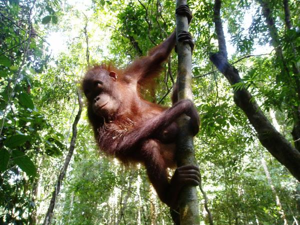 Borneo small group adventure holiday