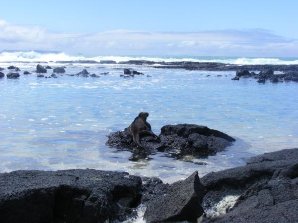 Ecuador and Galapagos family activity vacation