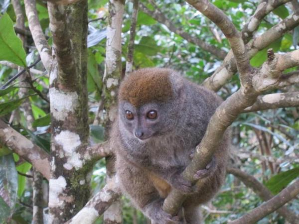 Small group vacations to Madagascar