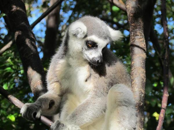 North Madagascar adventure and wildlife vacation