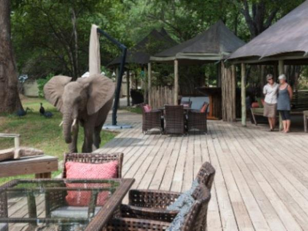 Zimbabwe & Zambia holiday
