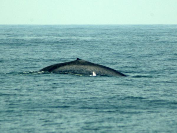 Blue whale watching vacation in Sri Lanka