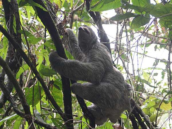 Costa Rica wildlife vacations
