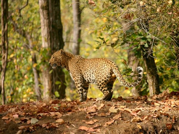 Southern India wildlife vacation, private departure