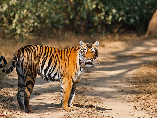 Golden Triangle with Ranthambore tour, India