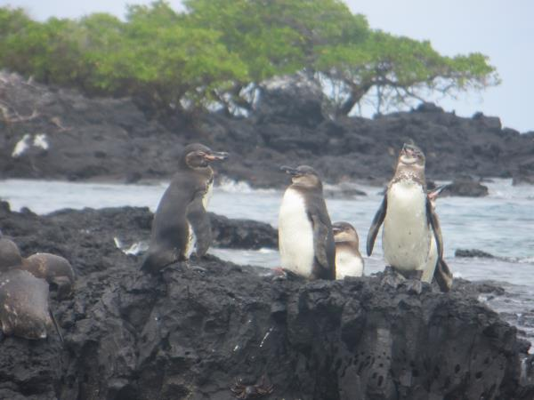 Galapagos family vacation, hotel based