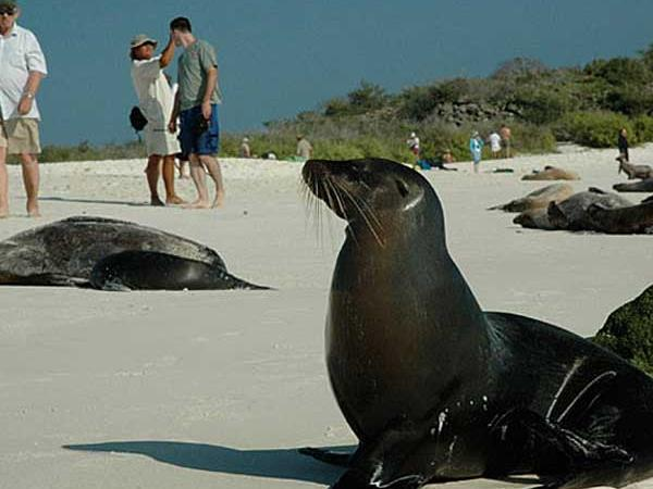 Galapagos cruise options, tailor made
