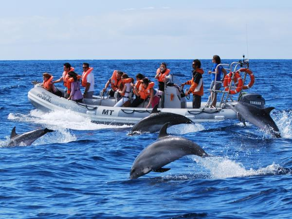 Family whale & dolphin watching vacation, Azores