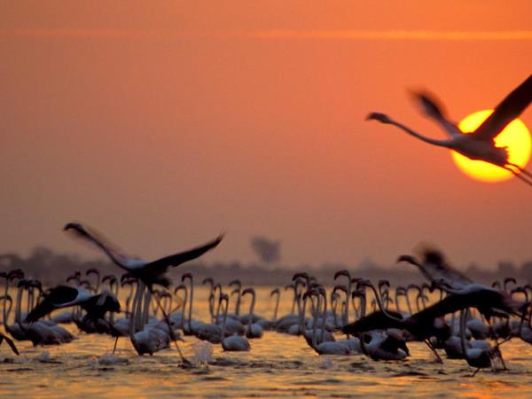 Gujarat vacation and the Rann of Kutch, India