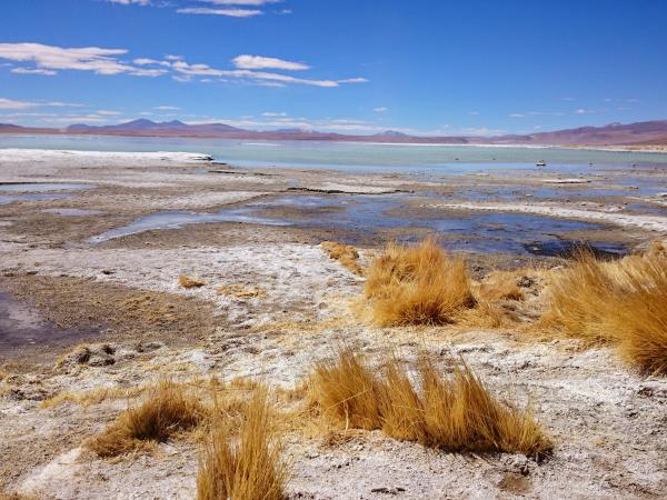 Bolivia salt lakes, lagunas & volcanoes vacation