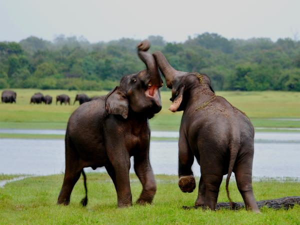 Wildlife tour and beach holiday, Sri Lanka