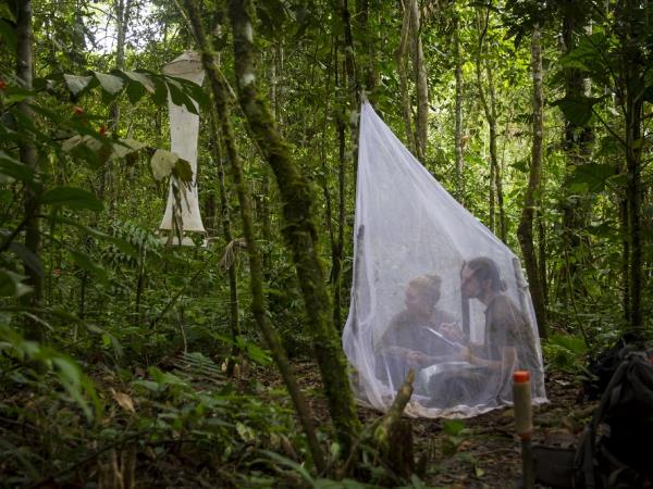 Amazon Jungle Pictures