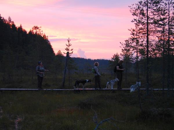 Wilderness activity vacation with huskies in Finland