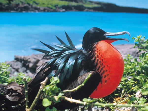 Galapagos & Ecuador tailor made vacations