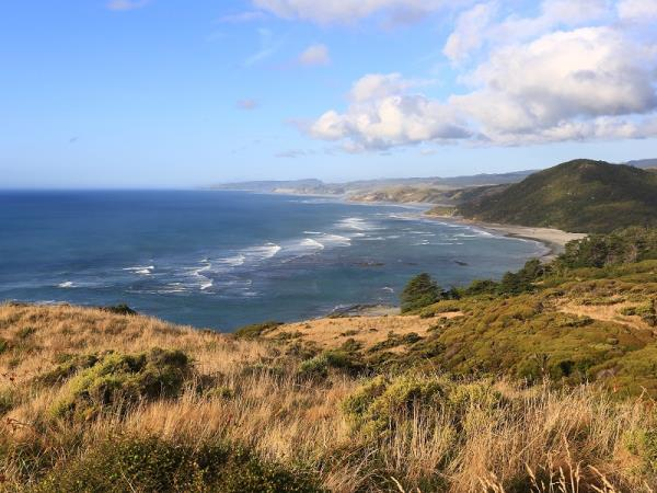 New Zealand birdwatching holiday
