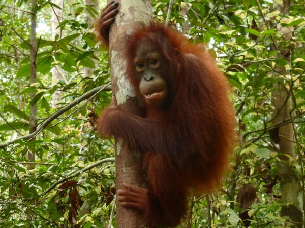 Indonesia vacation, orangutans and culture