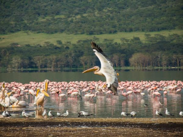 Kenya wildlife adventure vacation