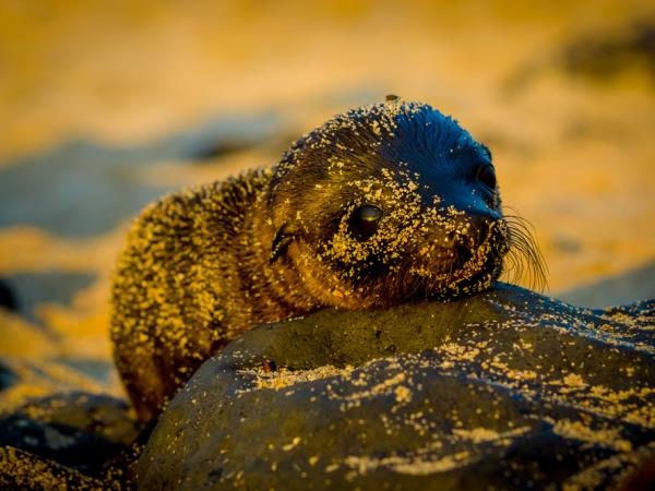 Peru and Galapagos Islands vacation, culture and wildlife