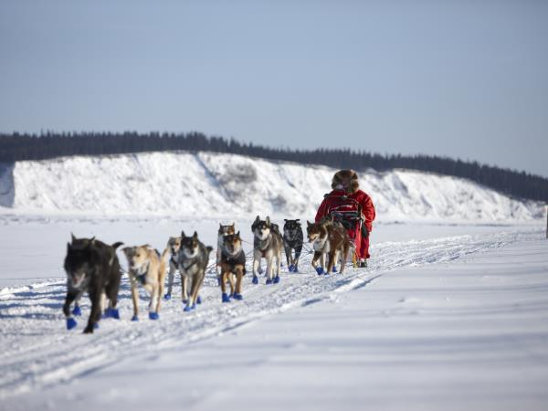 Alaska Northern Lights vacation, activities & Iditarod