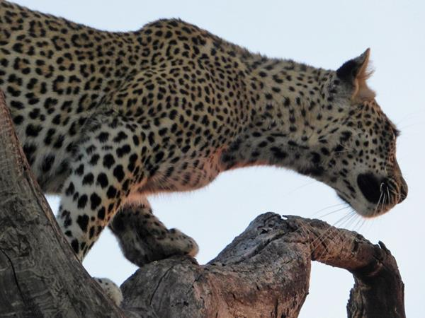 11 day South Africa safari vacation