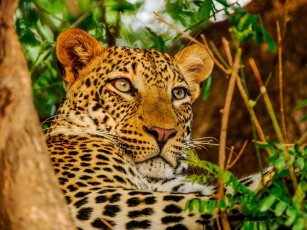 Zambia and Malawi tailor made safaris