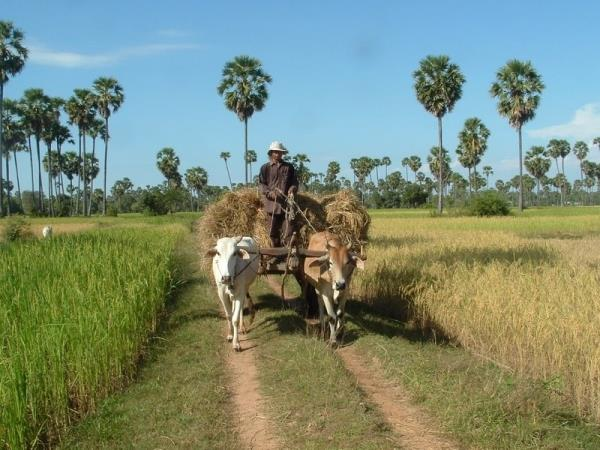 Cambodia adventure holiday, tailor made
