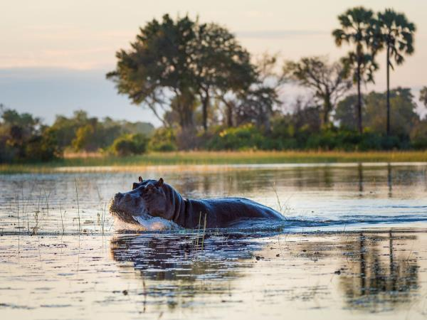 Okavango Delta tailor made safari in Botswana