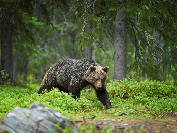 Grizzly bear tour in British Columbia