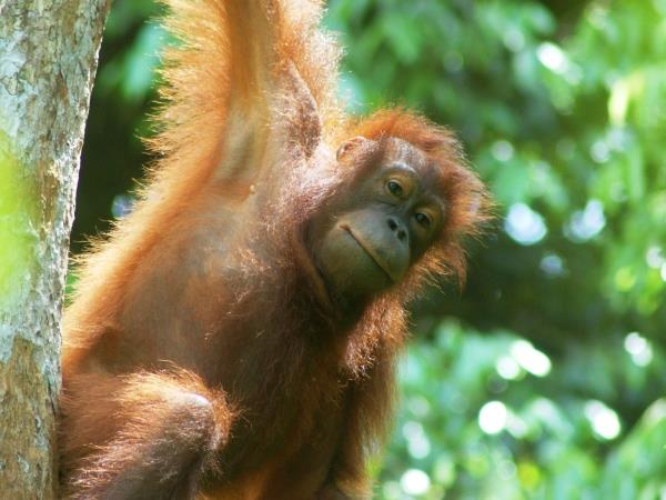 Borneo tailor made vacations, wildlife & beaches
