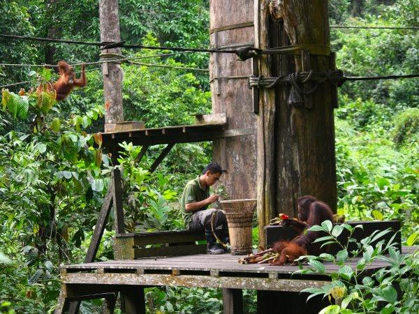 Borneo tailor made tour on a shoestring