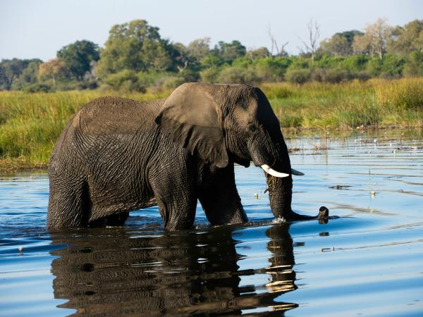 Luxury camping safari in Botswana