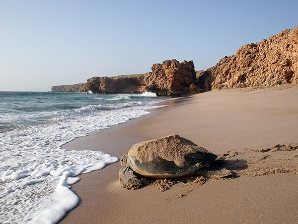 Oman vacation on a shoestring