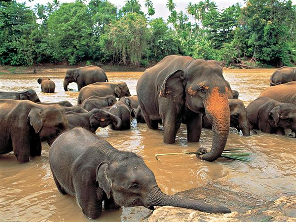Sri Lanka vacation, wild escapes