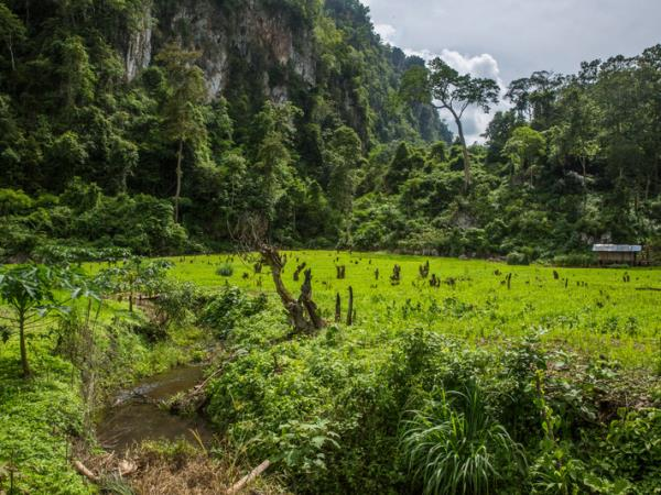 Northern Thailand and hill tribes tour